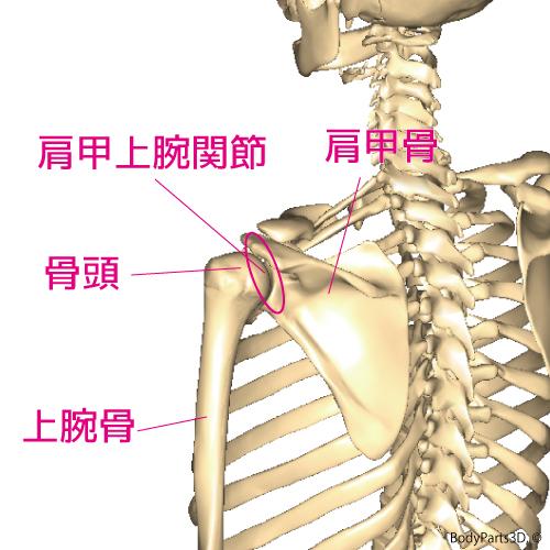 腱板炎(四十肩・五十肩)の特徴、原因、対策
